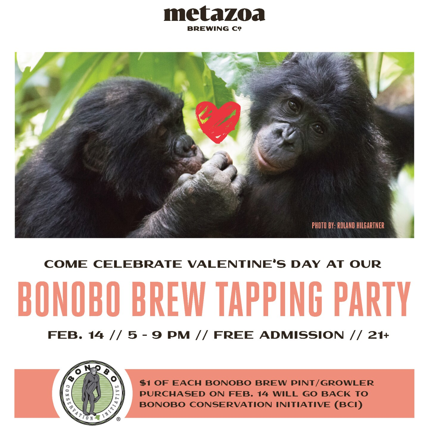 Bonobo Brew Tapping Party, Metazoa Brewing Company