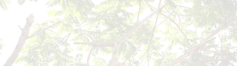 LeavesLeadBG2.jpg