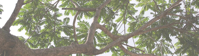 LeavesLeadBG3.jpg